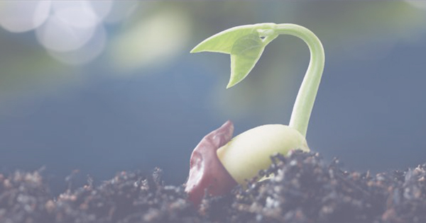Sowing the seeds for HR Success
